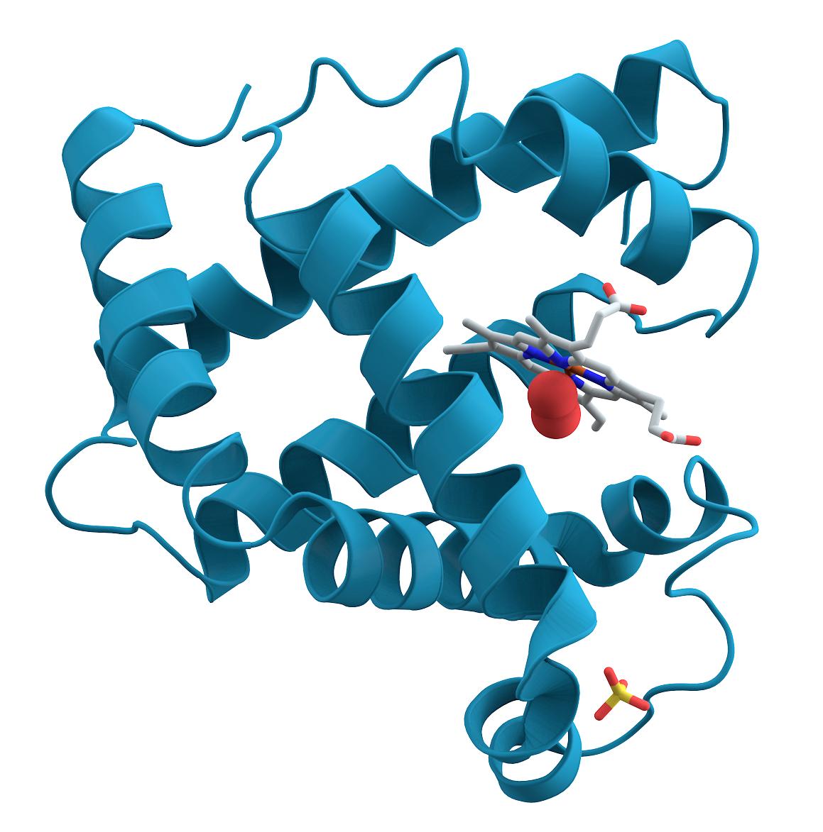 amino-acid-complex-protein